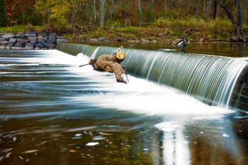 Текущая вода в лесу